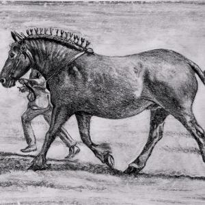 Kate Batchelor Suffolk Punch at the Show Monoprint Crayon