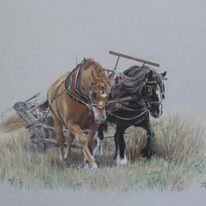 Jan Couling Clare. Working horses Shire and Punch Pastel