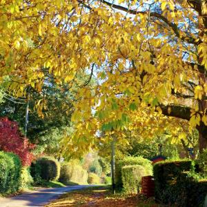 5 Autumn in Wenhaston Copy